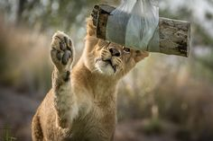 Just a Big #Kitty at Heart by Helene Hoffman