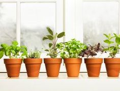 the nine easiest herbs to grow indoors