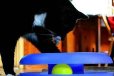 Read our expert tips and essential products for welcoming your new pet. #cat #cattoys #TuesdayMorning Classic ball track toy $5.99 (compare at $10.99)