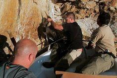 Rescatan a dos cigüeñas negras atrapadas en una mina