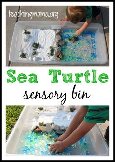 Sea Turtle Sensory Bin - great for dramatic play, science, and sensory play! Sensory Tubs, Sensory Boxes, Sensory Activities, Sensory Play, Learning Activities, Toddler Activities, Sensory Diet, Animal Activities, Indoor Activities