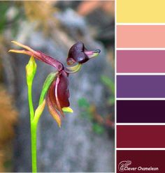 Duck into the Sunset color scheme from Clever Chameleon