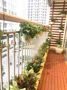Landscape Babylon - Blue Enhance your life! ☎️ 0899 909 119 - 0989 068 668 🏠 Au Co Street, Tay Ho, Hanoi Small Balcony Decor, Small Balcony Design, Small Balcony Garden, Balcony Plants, House Plants Decor, Plant Decor, Apartment Balcony Garden, Apartment Balcony Decorating, Apartment Balconies