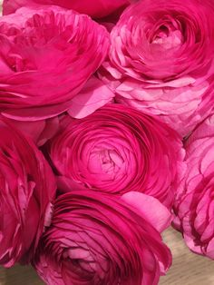 Bloomin' Beautiful | ZsaZsa Bellagio - Like No Other