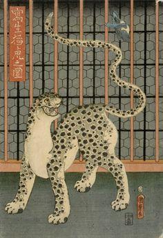 """yajifun: """" A Leopard Drawn from Life / Kunimaro 寫生猛虎之圖 歌川国麿 1860年…"""