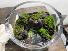 constructing a mini paludarium Paludarium, Vivarium, Moss Terrarium, Terrarium Ideas, Terrariums, Aquarium Gravel, Glass Cylinder Vases, Scrap Material, Sidewalk