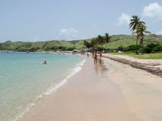 Cockleshell Beach, Basseterre, St Kitts: i hear the RCI does not allow shells to come back on their boats. :-(