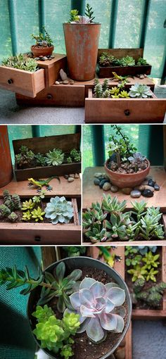 My Patio Succulent Garden: drawers, box, and metal bucket from local antique store filled with various succulents.