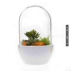 So neat White Pill Terrarium | CHECK OUT MORE GREAT HOME DECOR IDEAS AT DECOPINS.COM | #homedecor #homedecoration #decorators#decorating #interiordesign #kitchens #kitchenideas