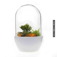 So neat White Pill Terrarium | CHECK OUT MORE GREAT HOME DECOR IDEAS AT DECOPINS.COM | #homedecor #homedecoration #decorators#decorating #interiordesign #kitchens #kitchenideas