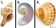 TEST: De schelp die jij kiest onthult erg veel over je karakter! Welke schelp vind jij het mooist?