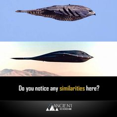 Do you notice any similarities here? Air Fighter, Fighter Jets, Pilot Humor, Stealth Bomber, Aviation Humor, Aircraft Design, War Machine, Military Aircraft, Air Force