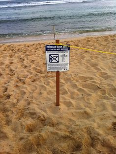 Hawaiian monk seals, please do not disturb. Submitted by Renata Vicente. #pinHawaii