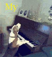 Dog Training Online Animals Giff #3271 - Funny Dog Giffs  Funny Giffs  Dog Giffs