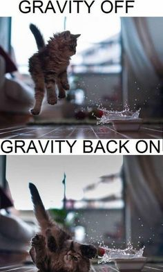 Gravity Cat Meme | Slapcaption.com