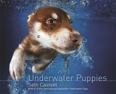 Dogs Underwater – Adorably Cute Faces You Can't Help But Fall In Love With Dogs Underwater, Underwater Swimming, Underwater Images, Swimming Pools, New York Times, Cute Photos, Cute Pictures, Amazing Pictures, Dog Photos