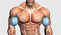 Top 5 shoulder workout GROW Shoulder Muscles With This Exercise - # 1 Oblique Workout, Abs Workout Video, Biceps Workout, Workout Guide, Shoulder Workout Routine, Best Chest Workout, Chest Workouts, Chest Exercises, Shoulder Exercises