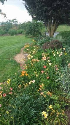 Flower bed- lots of daylilies