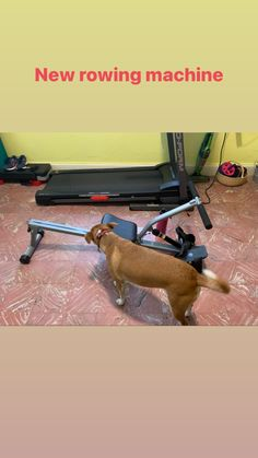 New rowing machine Ab Roller, Ab Wheel, Very Tired, Take It Easy, Keep Trying, Rowing, Side Effects, Do Anything, First Time