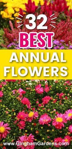 The Best Annual Flowers, includes the Best Annual Flowers for Shade and the Best Annual Flowers for Sun, information on how to determine the right time to plant annual flowers, tips for buying annual flowers, flower care, annual flowering vines and unique annual flowers. Annual Flowers For Shade, Shade Flowers, Gardening Zones, Planting, Rabbit Eating, Replant, Growing Seeds, Flowering Vines, Large Plants
