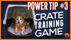 Crate Training Games - Power Tip Bait + Restrain Puppy Training Tips, Dog Training Videos, Training Schedule, Crate Training, Plastic Crates, Like Animals, Dog Houses, Bait, Dog Love