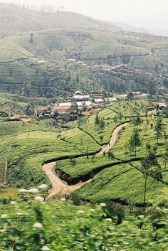 Sri Lanka - Tea plantations seen from the train from Nuwara Eliya to Ella