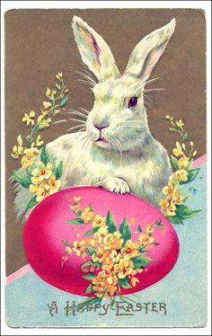Vintage Easter bunny postcard.