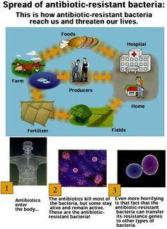 Cycle of Antibiotic Resistance