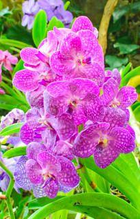 ber ideen zu blaue orchideen auf pinterest. Black Bedroom Furniture Sets. Home Design Ideas