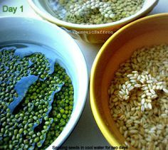 Growing Seeds (Sabzeh) For Nowruz (Persian New Year)