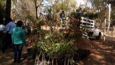 Entrega Gobierno del Estado 10 mil árboles para contribuir al Oaxaca Sustentable