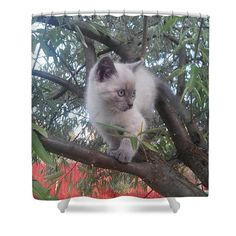 Kitty Shower Curtain by Cotfas Doina. This shower curtain is made from polyester fabric and includes 12 holes at the top of the curtain for simple hanging. The total dimensions of the shower curtain are wide x tall. Canvas Art, Canvas Prints, Curtains For Sale, Canvas Material, Places To Visit, Kitty, Cats, Fabric, Animals