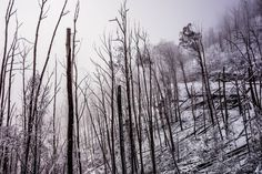 Eerie fog and snow on the great alpine road, Mt Hotham. Landscapes, Australia, Snow, Places, Outdoor, Image, Beautiful, Outdoors, Scenery