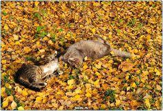 Коты играют  #фото #кошки #кошка #кот #Россия #Серпухов #Тула #Москва #СПБ #осень #год #мир #дети #ребенок #котенок #Самара #Хабаровск #Добро #Екатеринбург #animals #cats #cat #animal #kids #kid #russia #moskow #kitty #pet #pets