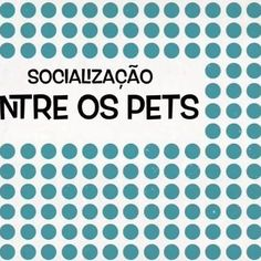 Vem pra Fashiondog..... #pets#dogs#cats#birds#rabbits#lovablepets