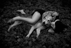 shooting of helsing a wolf on Yummypets.com #cute #animal #pet #star #dog #chien #loup Discover other photos HERE ==> http://www.yummypets.com/pic/2272231