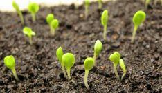 Pěstování bylinek a zeleniny je snadné. Chce to ale dodržet některé postupy. Určitě jedním znejdůležitějších je správné vysetí semínek. Jaké vybrat výsevní misky, jak si vyrobit vlastní výsevní substrát a hlavně jak správně vysévat semínka. Součástí článku je i fotonávod výsevu. Balcony Garden, Growing Plants, Hydroponics, Indoor Plants, Gardening Tips, Cooking, Lawn And Garden, Inside Plants, Kitchen
