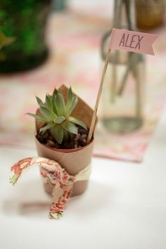 succulent wedding favours, image by Chris Giles Photography