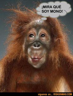 Mono presumido  http://bit.ly/MN3CLM