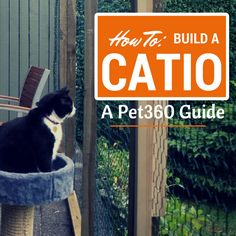 Looking for a fun summer project that your cat will cherish for years? A Catio is the perfect thing to build!