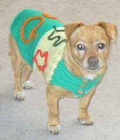 As the fall season approaches and the cooler weather blows in, there is nothing better for your dog to look forward to than a brand new dog sweater...