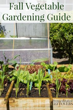 Fall Vegetable Gardening Guide - Extend your garden by growing vegetables in the fall. Plants that can grow well in the fall and tips for fall gardening.