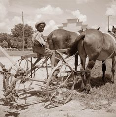 King and Anderson Plantation near Clarksdale Mississippi. This child is getting ready to do some plowing behind a team of horses. The pictur...