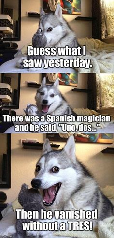 14 Best Jokes From Pun Husky - Jokes - Funny memes - - Why Did Mozart Killed His Chicken? The post 14 Best Jokes From Pun Husky appeared first on Gag Dad. Husky Jokes, Dog Jokes, Puns Jokes, Corny Jokes, Animal Jokes, Funny Animal Memes, Funny Puns, Memes Humor, Funny Animal Pictures