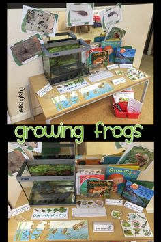 Growing frogs. Interactive display in class.