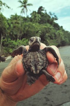 I actually held a turtle this small in mexico. He was born the day I held him/her