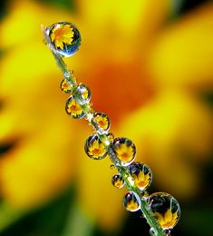 """dew drops"" by tugba kiper, via 500px."