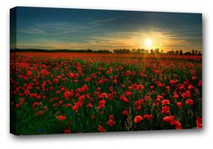 Red Poppy Field Beautiful Wall Art Framed Canvas Print A1 22 x 32  Large Sizes