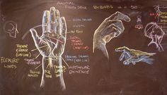 Rey Bustos (blackboard anatomy drawing)