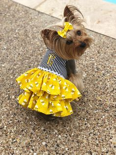 Buzzy Bee Dog Dress, Customizable to your pets measurements! Size XXS XS and Small Buzzy Bee Dog Dress Personalizable para las medidas de tus mascotas Bee Dog, Cute Dog Clothes, Girl Dog Clothes, Diy Yorkie Clothes, Small Dog Clothes, Yorkie Dogs, Yorkies, Maltipoo, Puppies